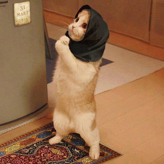 por favor おかしな動物 子猫 猫用テント