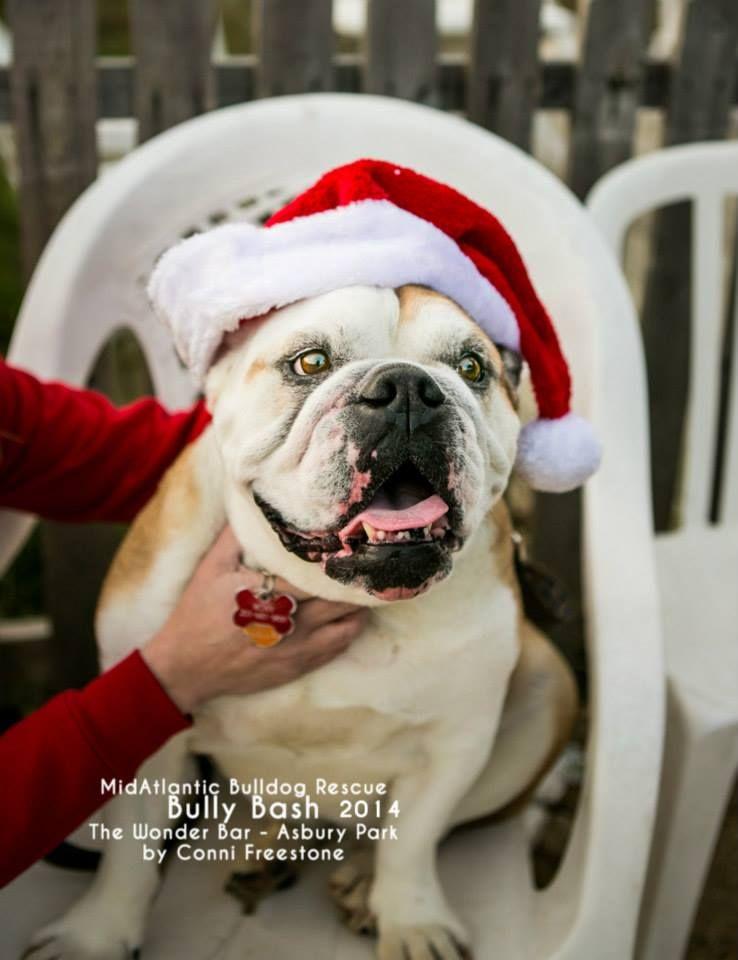 MidAtlantic Bulldog Rescue Bully Bash November 8, 2014
