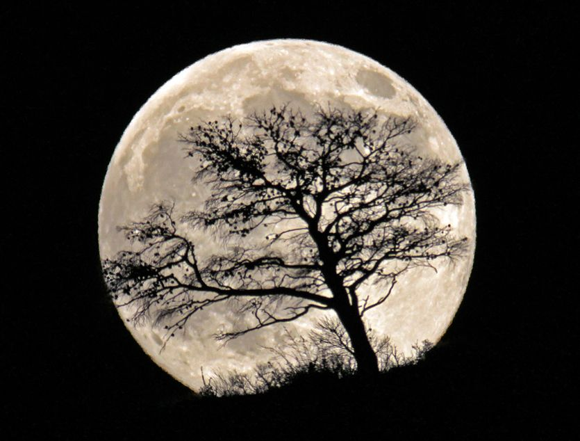 Moonrise And Burnt Tree At Kalivia Attiki Beautiful Moon Good Night Moon Cool Pictures