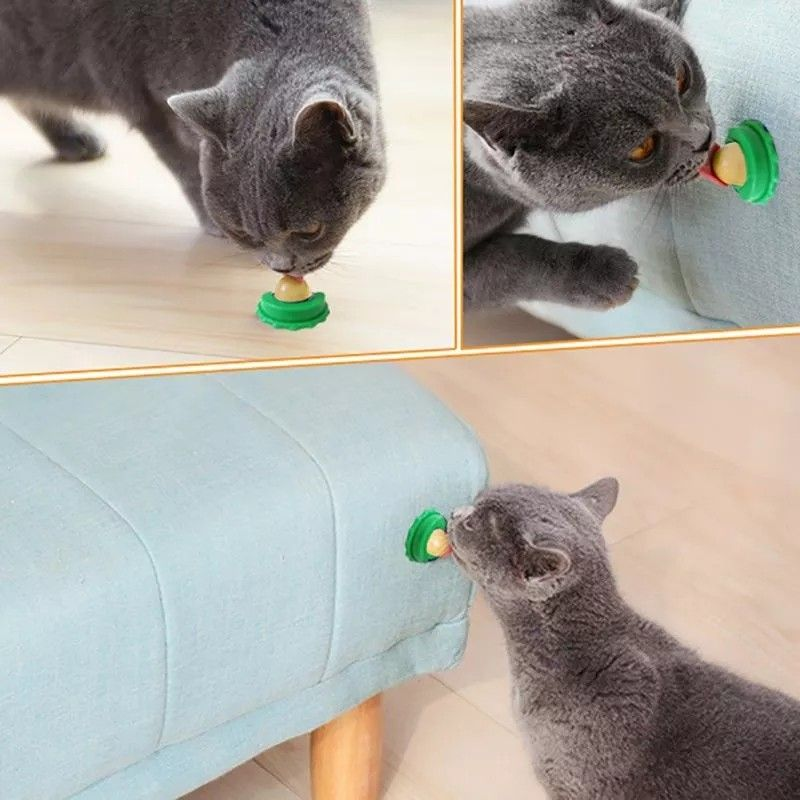 Cat Lickety Lick Treats Stick On Wall Free Shipping Worldwide Cat Snacks Cats And Kittens Kitten Toys