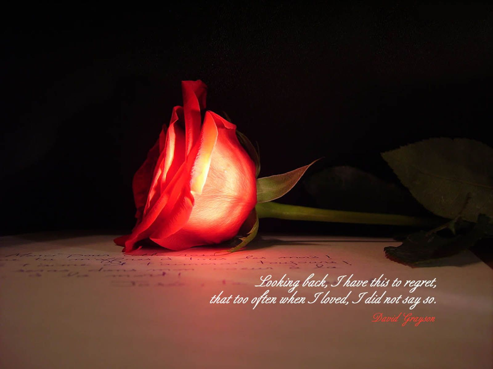 Free Love Poems And Quotes 34 Amazing Red Rose Love Quotes  Random Thoughts And Thoughts