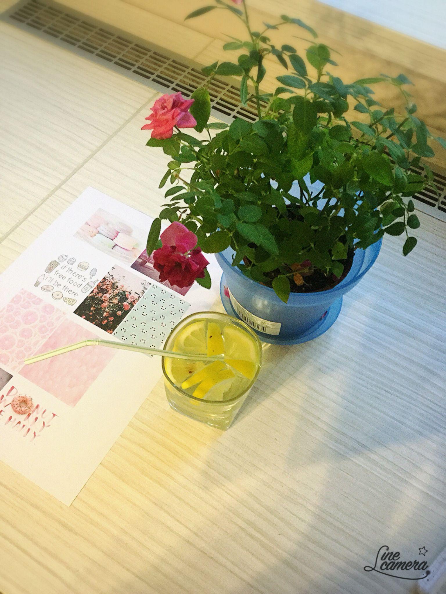Flowerstumblrlemonwater love pinterest flowers
