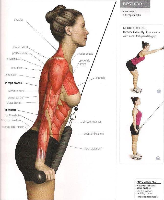 extension triceps | Entrenamiento | Pinterest | Ejercicios, Rutinas ...