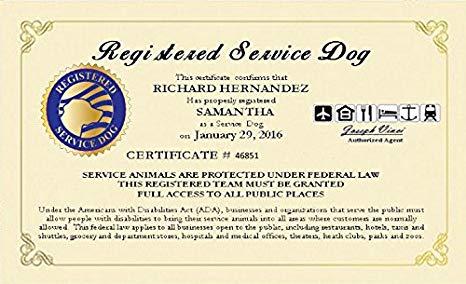 Service Dog Certificate Template 6 Dengan Gambar