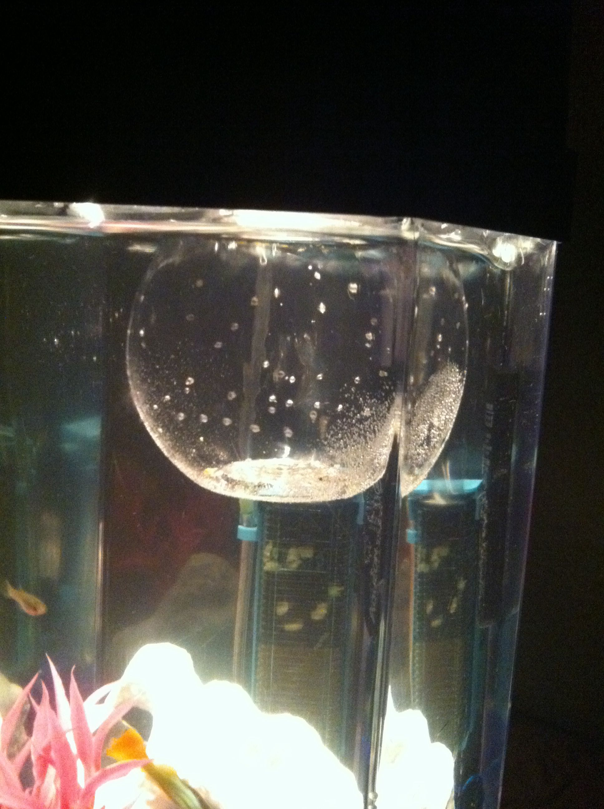Diy little baby fish tank i love this idea with this the bigger