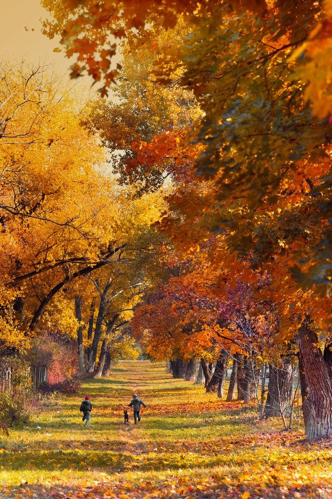 Finally Fall!   autumn   fall leaves   orange and yellow   nature   forrest