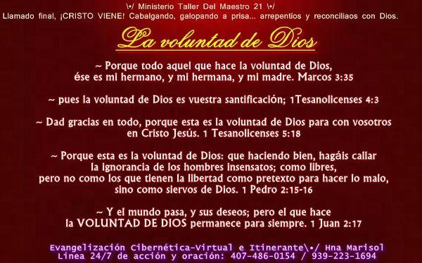 La Voluntad De Dios Pues La Voluntad De Dios Es Vuestra Santificación 1tesanolicenses 4 3 Dad Gracias En Todo Porque Esta Es La Voluntad De Dios Bible