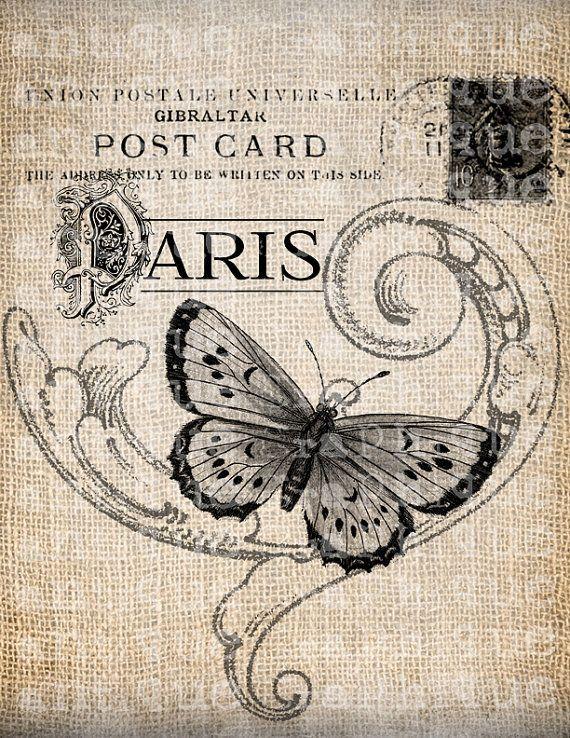 Fransk tekst med sommer fugl
