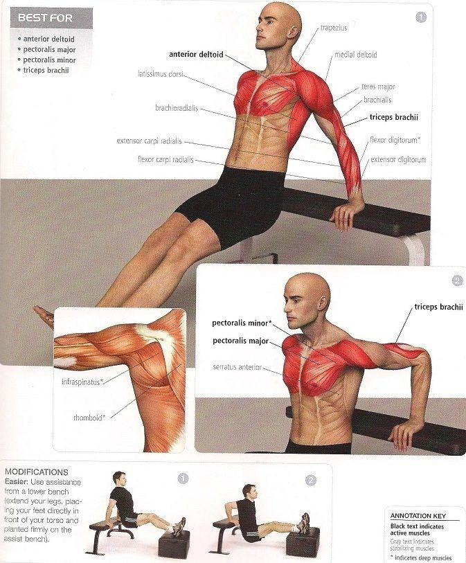 fondo triceps en banco   entrenamiento   pinterest   bancos