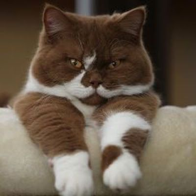 Brown Cat With White Mustache Content In A Cottage Pretty Cats Cute Animals Cute Cats