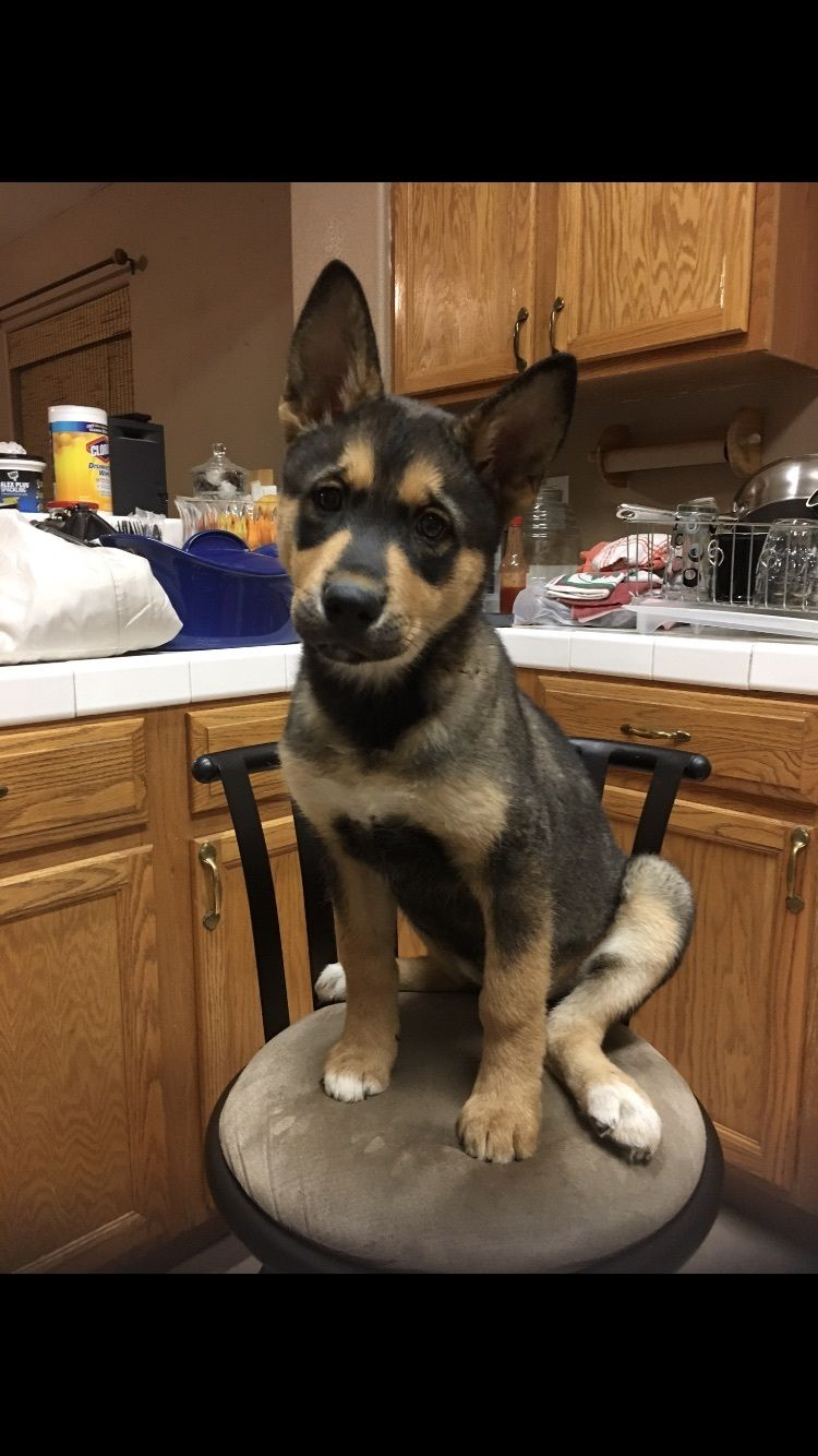 Adopt Athena on Dog adoption, Husky mix, Dogs