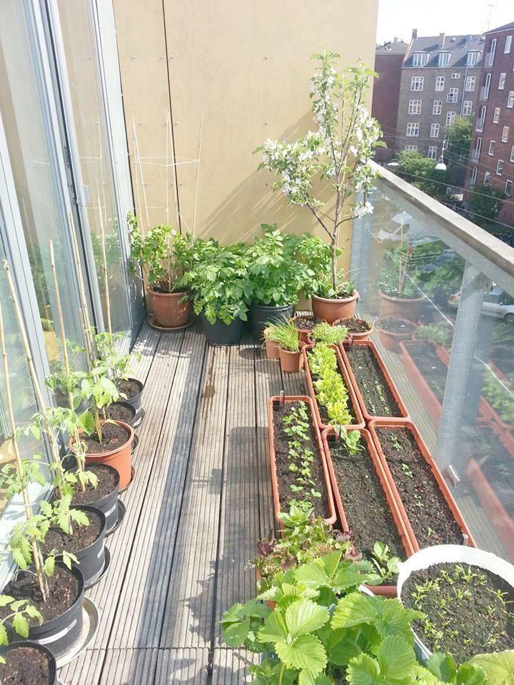 Garden Patio - SalePrice:19$ | Small balcony garden ...