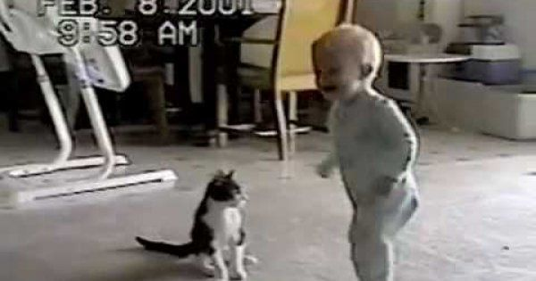 It's an epic wrestling match, but who wins? #cat vs #toddler