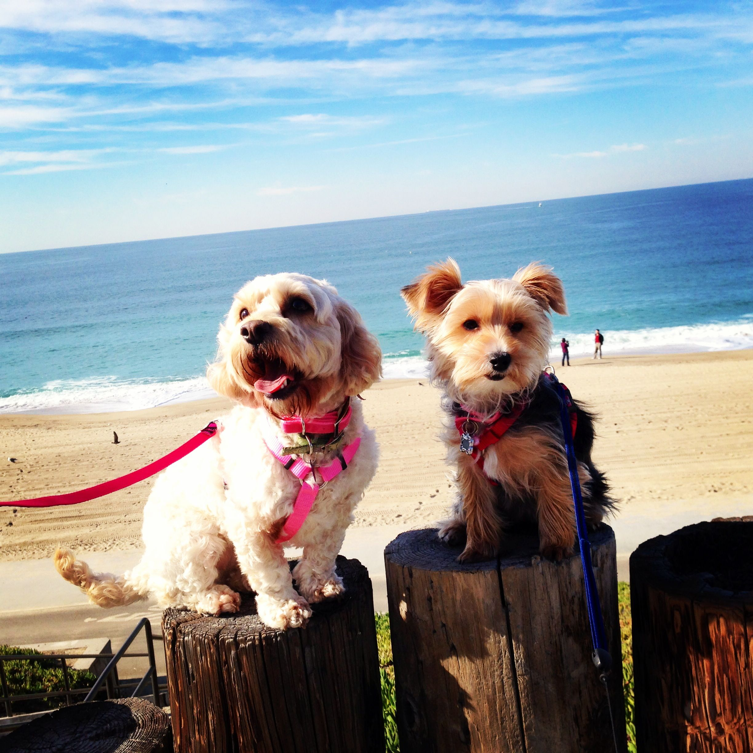 Dogs day at the beach :)