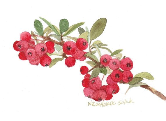 Red Berries Reproductionl Watercolor by wandazuchowskischick
