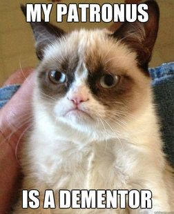 grumpy cat...ahhh harry potter humor. Don't love grumpy cat but like this one