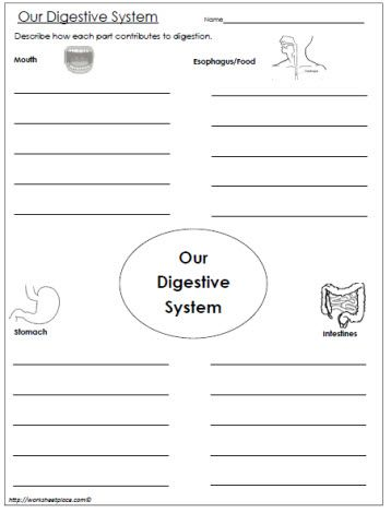 Our Digestive System Graphic Organizer | Homeschool-Science ...