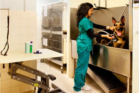 Canine bathing - Coral Springs Animal Hospital in Coral