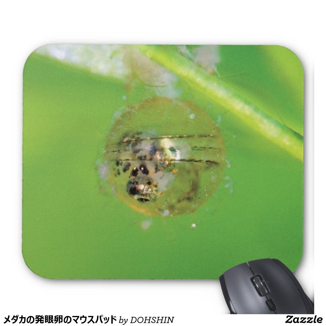 Mouse pad of eyed egg of cyprinodont