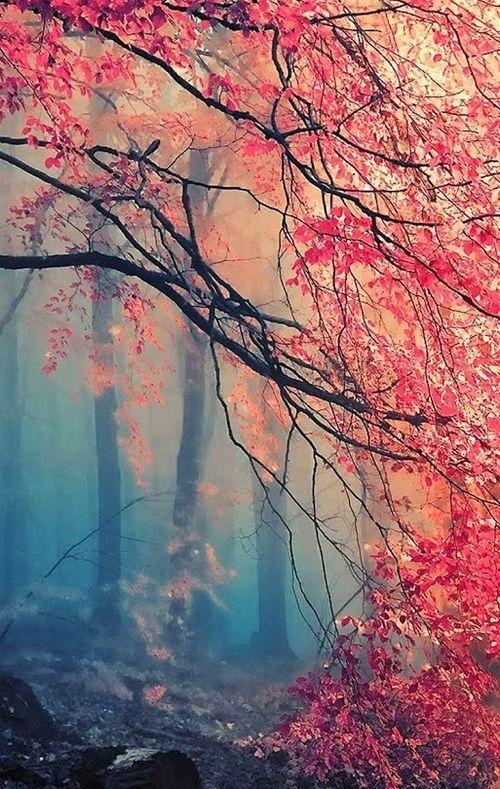 Misty Japanese Maple Good For Phone Background