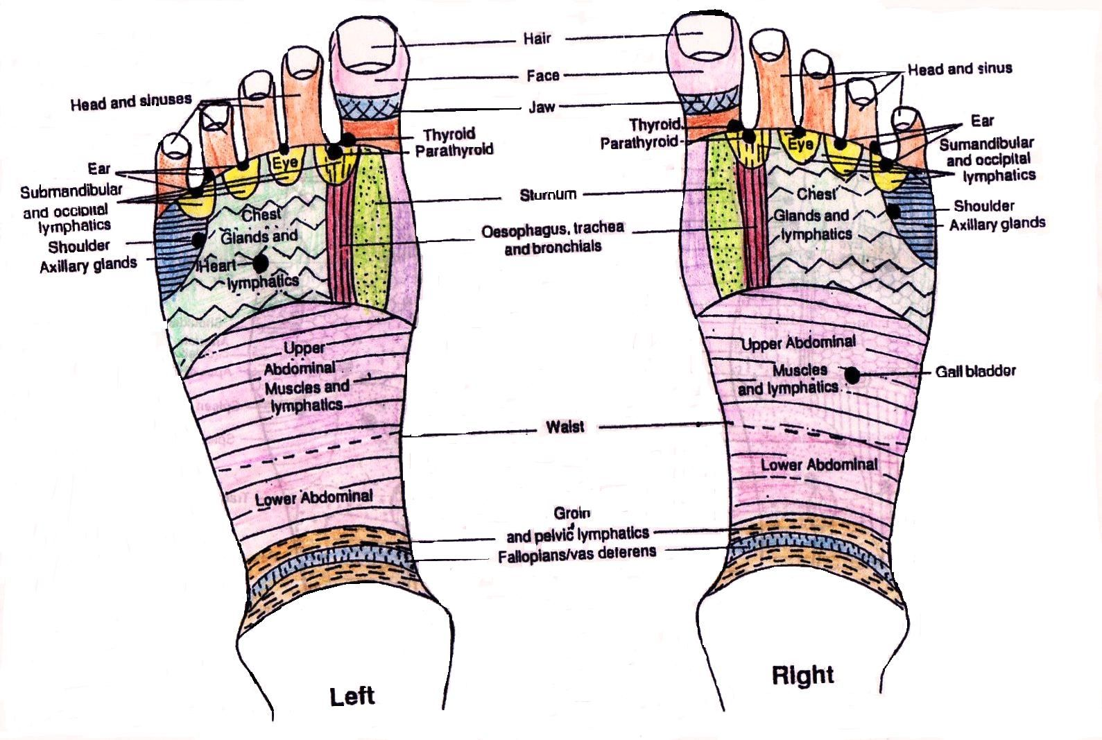 Foot Reflexology Points | Reflexology Foot Map ...