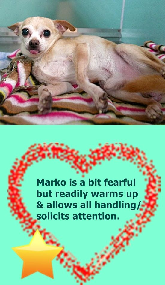 Pin By Marta Iturribarria On Ny Nj Little Paws Small Breed Dogs