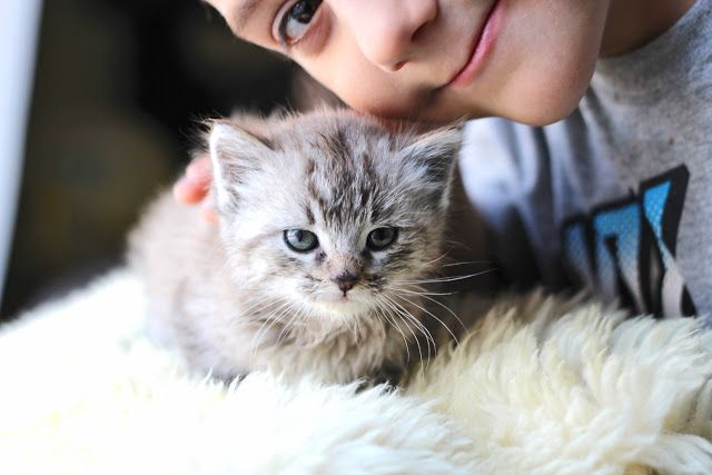 10 CAT TIPS FOR NEW OWNERS
