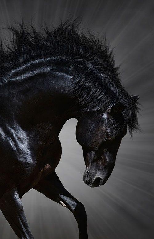 Money And Markets Horses Black Horses Beautiful Horses Black and white horse wallpaper hd