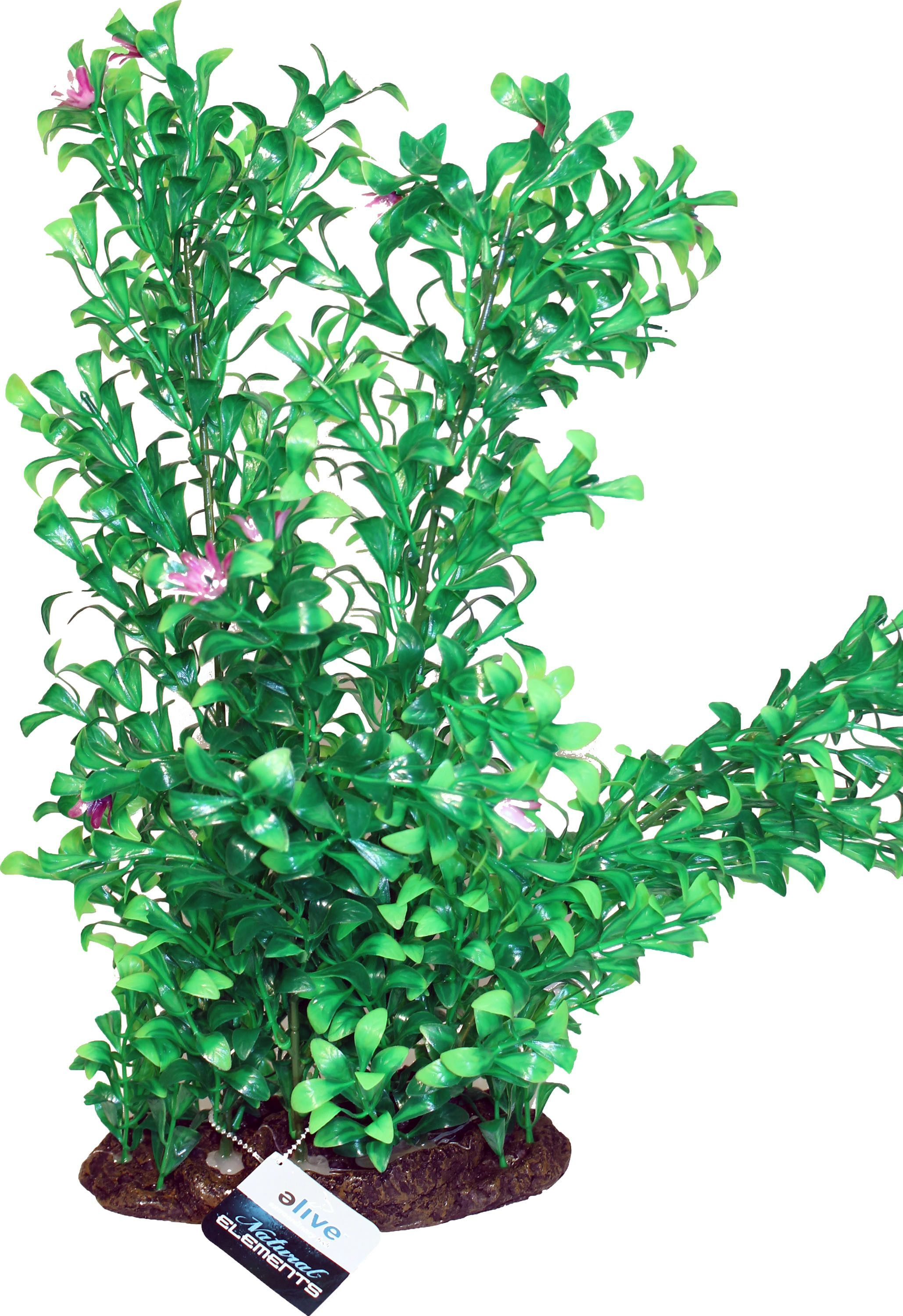 Natural elements blooming ludwigia plant ornament products