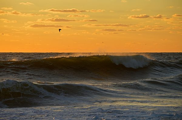 Listen To The Sea Roll In By Dianne Cowen Cape Cod Beaches Surfing Waves Ocean Beach