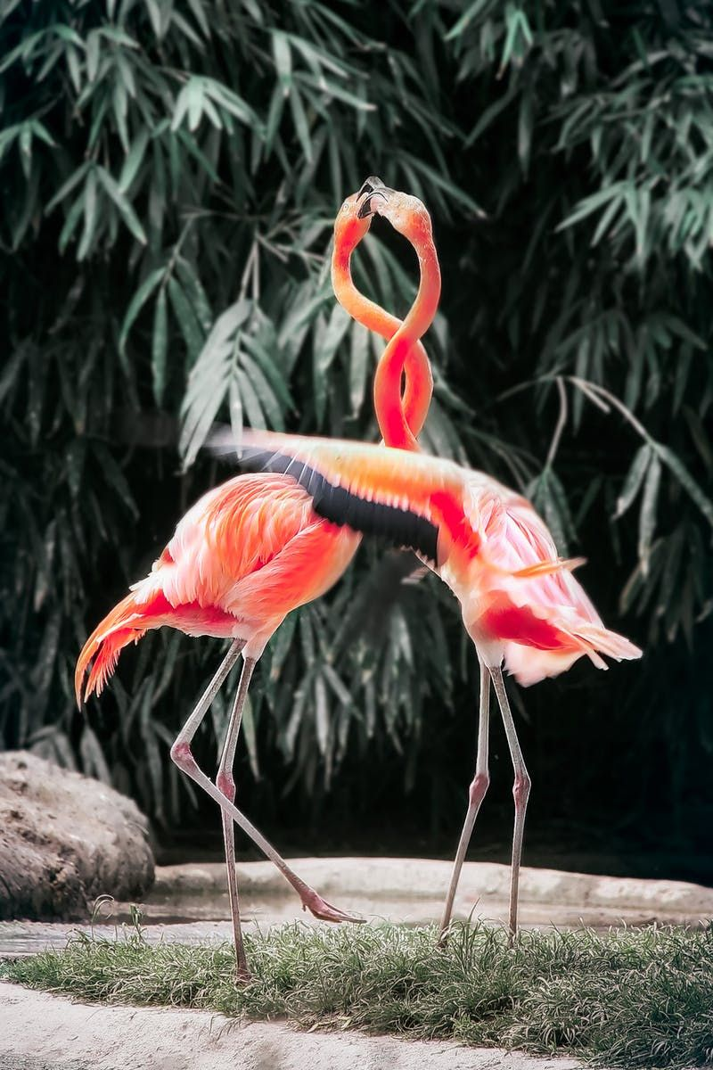 Two Pink Flamingos Animal Luve Stories Luveurpet