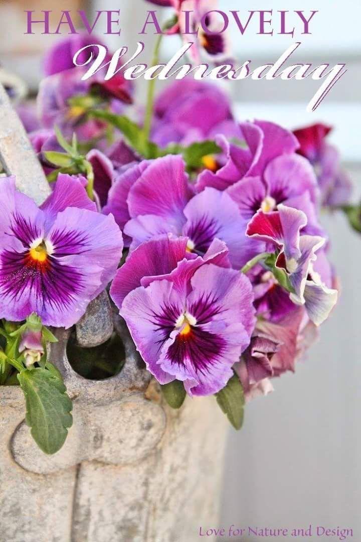 January | 2013 |Wednesday Flowers