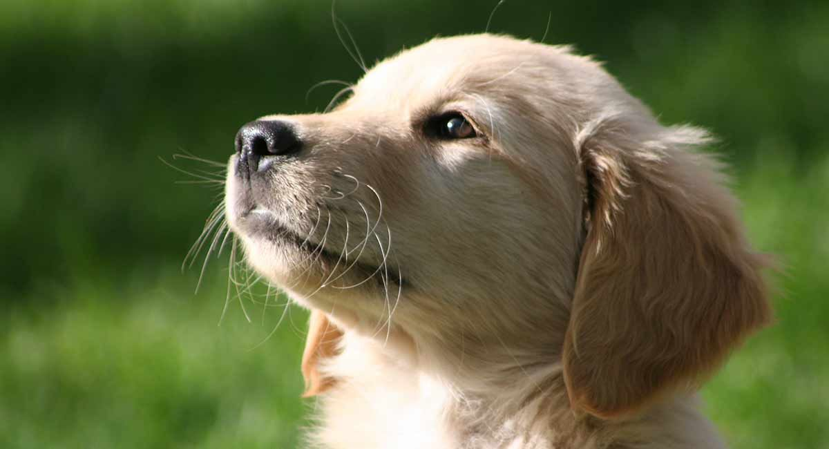 Puppy Potty Training Schedule With Examples For Pups Of Different