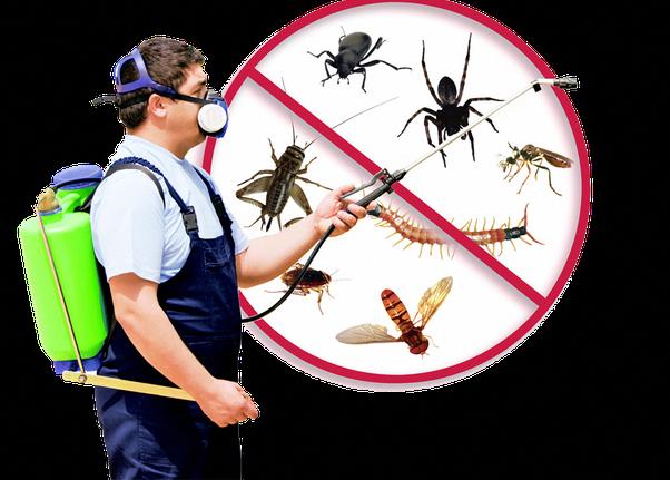 Pest Control Singapore Get professional Pest control