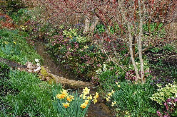 Garden Nursery Hellebore Photo Gallery