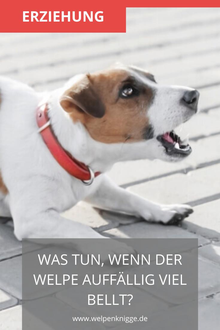 Was Kannst Du Nun Tun Damit Dein Welpe Aufhort Zu Bellen In 2020 Welpen Hunde Welpen Erziehung Hundeverhalten