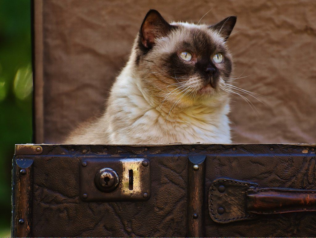 Cats For Sale Near Me WhyCatsAreBetterThanDogs ID