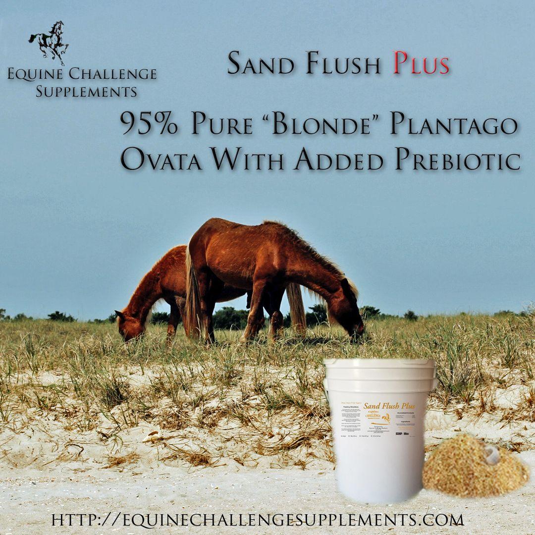 Psyllium Horse Supplement Sand Flush Plus Equine Challenge Supplements Horse Supplements Horses Diet Equine Nutrition