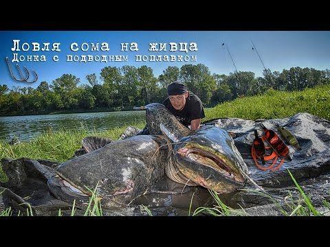Ловля сома на живца. Донка с подводным поплавком - YouTube ...