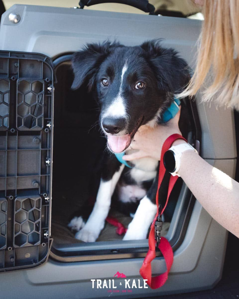 This Review Covers Why My Parents Choose To Use A Gunner Kennel The Crate S Safety Features The Advantages Of Using This Trav Dog Adventure Kennel Pet Safety