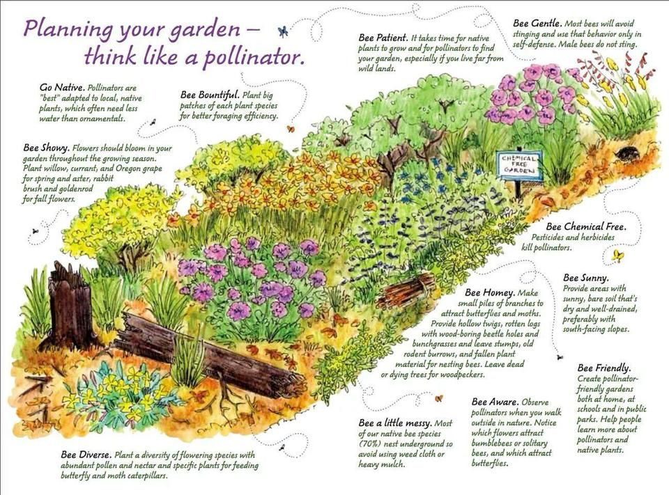 Bee Friendly Plant A Pollinator Flower Garden Bee
