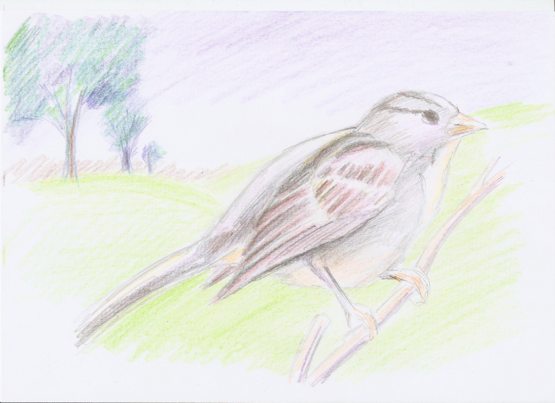 Dibujo De Un Lapiz De Color: Dibujo Artistico Para Niños: Como Dibujar Un Pajaro Con