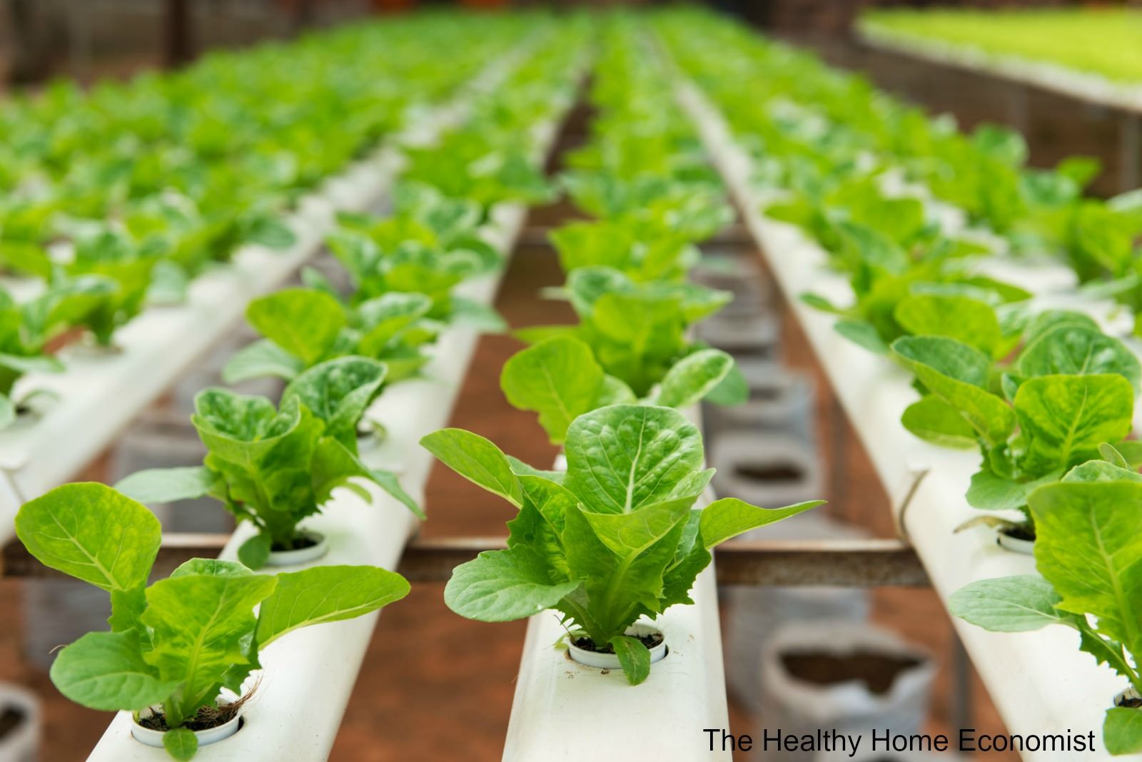Organic Hydroponics Not For Me The Healthy Home Economist Hydroponic Vegetables Aquaponics Hydroponic Growing