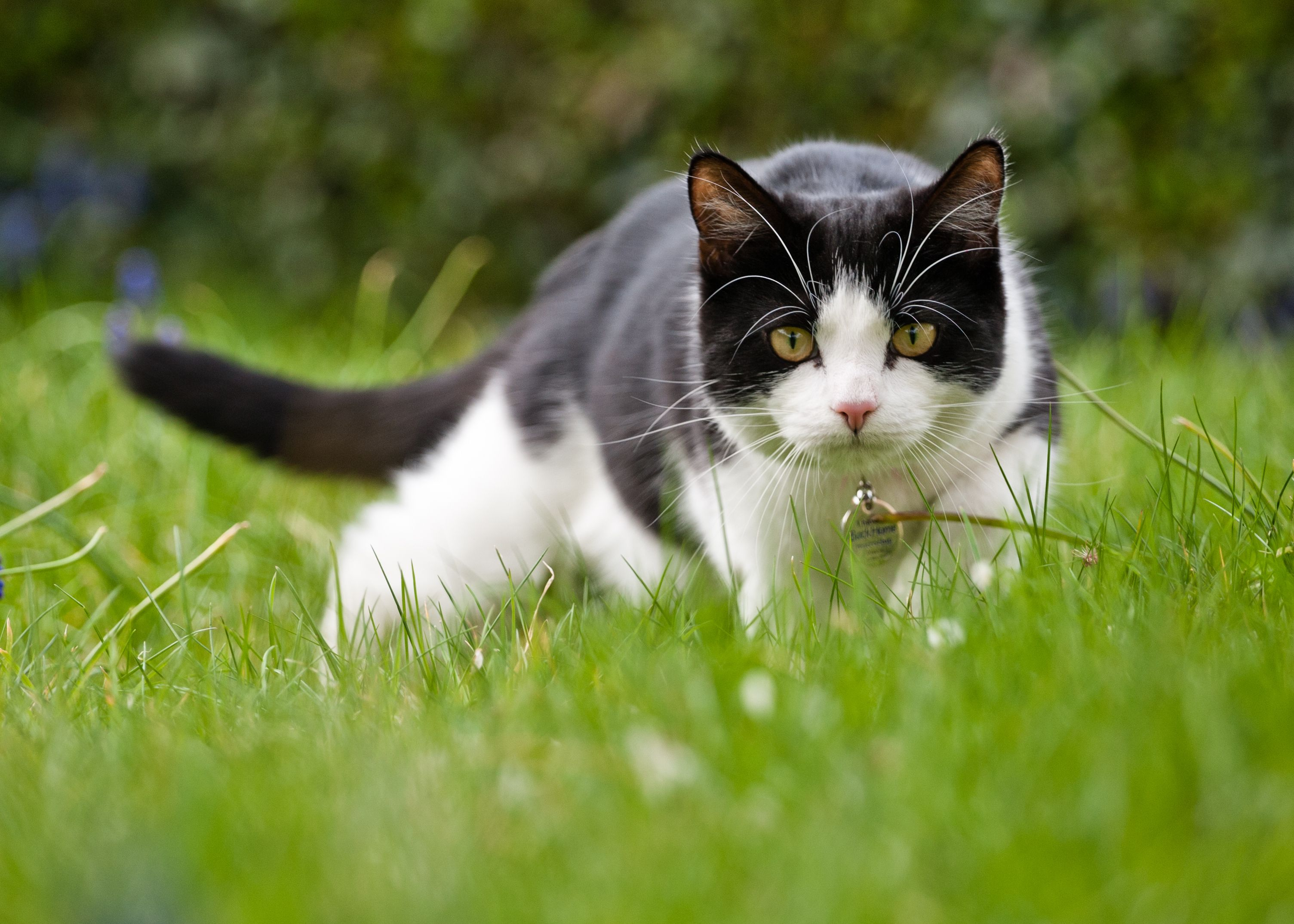New Zealand Village Proposes Banning House Cats To Protect Wildlife Cats Outside Domestic Cat Animals