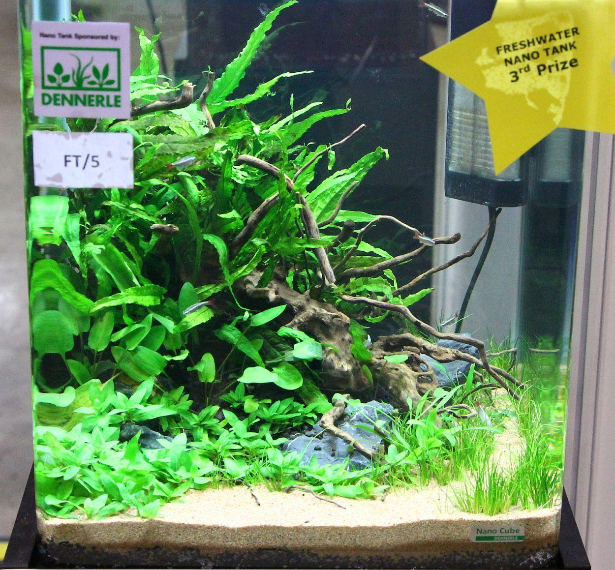 freshwater nano tank 3rd1 jpg 1250 215 1159 aquascaping nano aquarium aquariums