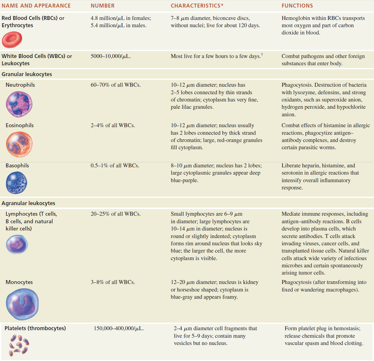 Summary Of Formed Elements In Blood