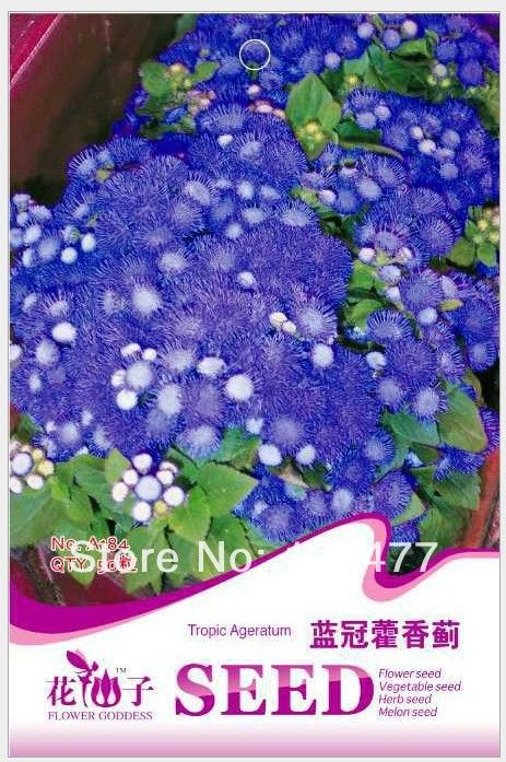 Flowers Ageratum Conyzoides Ageratum Conyzoides Seeds Flowers Seeds About 50 Particles In Bonsai From Home Garden On A Flower Seeds Planting Bulbs Flowers