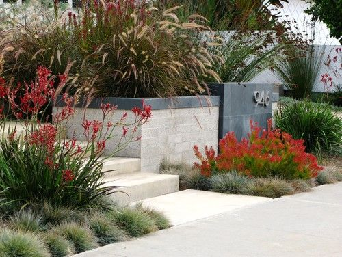 Aginozanthas And Grasses Strap Leaf Plants And Grasses And Dimension To Steps And Concret Native Garden Front Yard Landscaping Design Australian Native Garden
