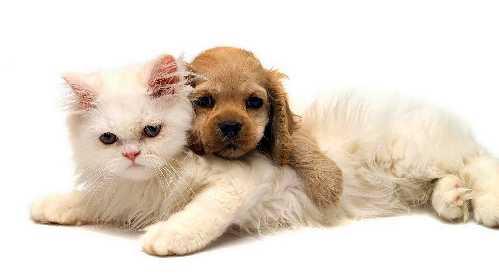 Dogs And Cats Images Hd Animal Wallpaper Of A Cat And Dog Cuddling