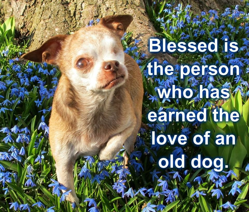 Senior Dogs Need Love Too Nmdr Seniordogs Speciallove Old